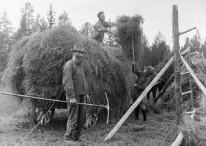 Hemmansägaren Ollas Per Persson och två pojkar vid höbärgning i Almo. Foto: Einar Erici.